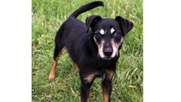 Das ist der süße Senior Rocky. Der Arme kennt das Tierheim Berlin schon seit 2009.
