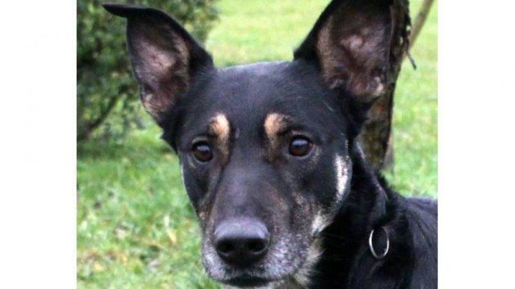 Haben Sie ein Plätzchen im Wohnzimmer frei und ein wenig Ahnung von Hundeerziehung? Dann helfen Sie Charly!
