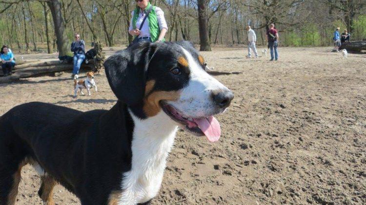 Dando am großen Sandstrand. Ein prima Spielplatz für Hunde - nur bei Überfüllung kann es etwas anstrengend werden. Für Zwei- und Vierbeiner. Mehr Bilder? Klick' dich durch!