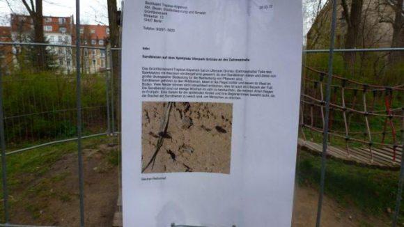 Wie der Aushang des Bezirksamtes erklärt, sind die hinter dem Zaun im Boden nistenden Sandbienen harmlos.