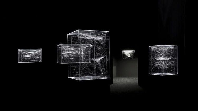In unterschiedlich großen Glaskästen befinden sich die verschiedenen Spinnweben.