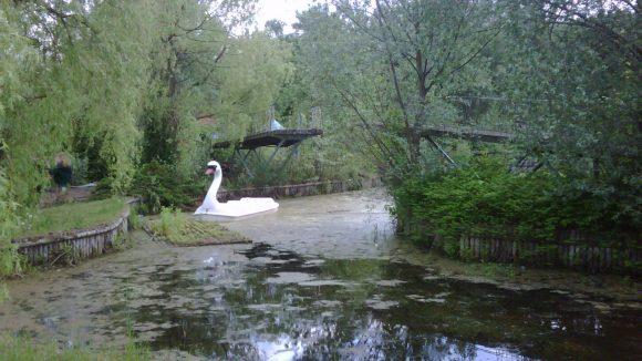 Schwan allein im geschlossenen Spreepark Plänterwald