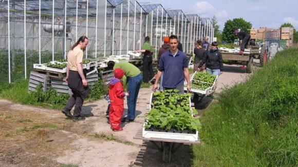 Das Projekt Sterngarten-Odyssee organisiert Arbeitseinsätze in ökologisch wirtschaftenden Betrieben. Dafür gibt es jede Woche leckeres Obst und Gemüse sowie Säfte.