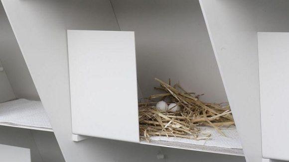 68 Nistplätze stehen den Tauben zur Verfügung.