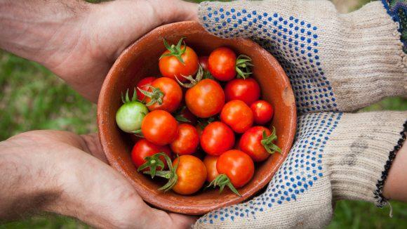 Die Tomatenernte, ein Rad oder einen Schlafplatz - in Berlin kann man fast alles teilen oder leihen.