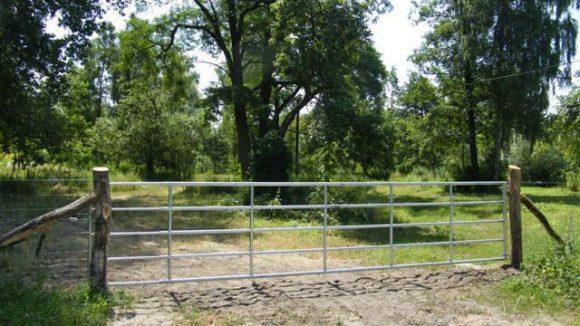 ... doch an vielen Wegen versperren nun Gatter und Zäune den Durchgang. Grund: Das Beweidungsprojekt mit Wasserbüffeln.