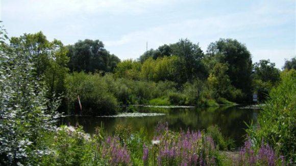 Die Tiefwerder Wiesen sind ein von den Anwohnern gern für Spaziergänge genutztes Landschaftsschutzgebiet.