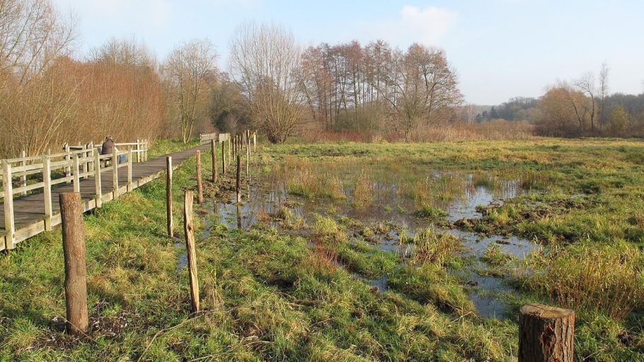 Ein Bohlensteg führt durch einen Teil der Tiefwerder Wiesen. In den kommenden Jahren soll das Gebiet umfassend Renaturiert werden.
