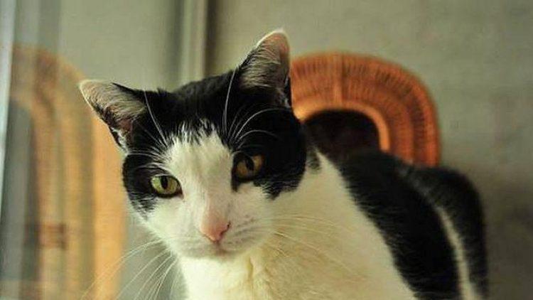 Rund 820 Katzen warten derzeit im Tierheim Berlin auf ein neues Zuhause. Das hier ist Hide Out.
