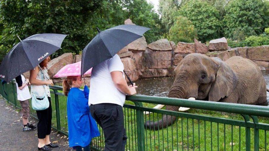 Trotz seines Artenreichtums zieht der Tierpark Friedrichsfelde zu wenige Besucher an. Ein Masterplan will den Park mit neuen Angeboten attraktiver machen.