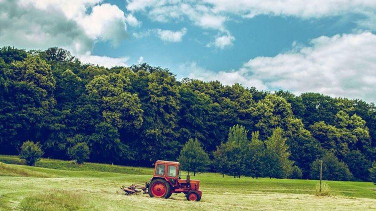 Das Traktorfahren überlassen wir mal den Jungs. Beim Tiere streicheln sind wir aber ganz vorn mit dabei!