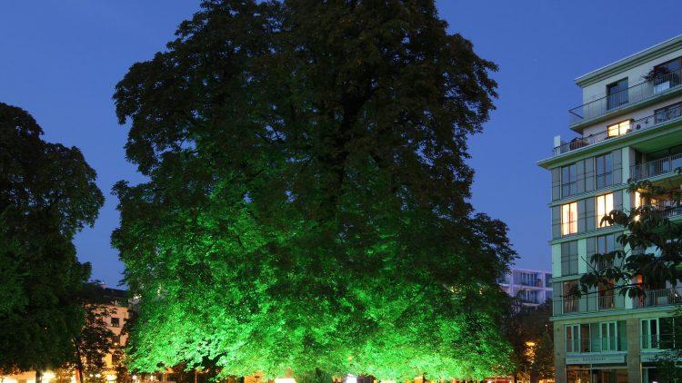 Zwischen 5000 und 6000 Kastanien fallen von diesem Baum - und erzeugen traumhafte Töne.