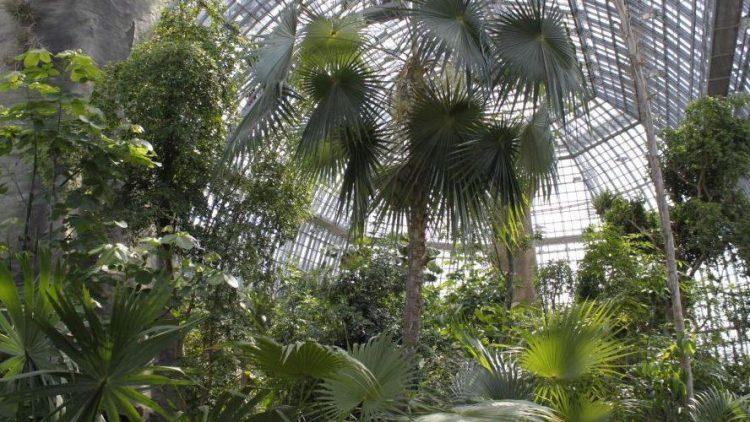 Zwischen den urwüchsigen Pflanzen des Tropenhauses können Besucher in den kommenden Monaten auf Hörspiel-Safari gehen.