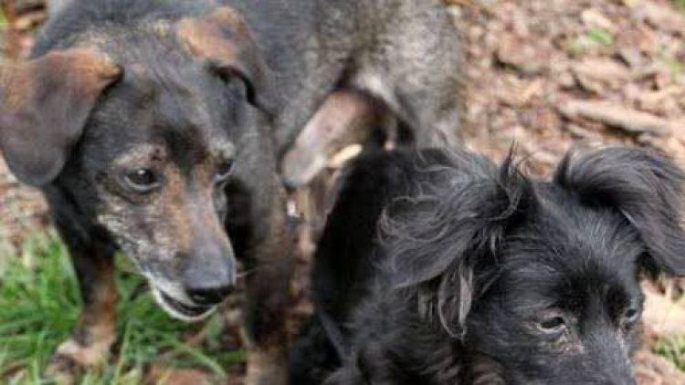 Trude und George warten schon seit Ende April im Tierheim auf ein neues Herrchen und/oder Frauchen.