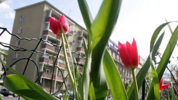 """Auch in der Reichenberger Straße in Kreuzberg setzen sich Anwohner für die Verschönerung des Kiezes durch """"Urban Gardening"""" ein."""