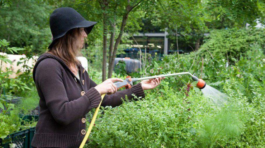 Die Grüne Liga erklärt, wie urbane Gärten im Hinterhof entstehen können.