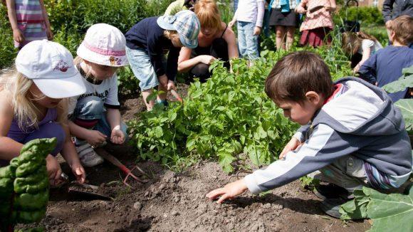 Gemüse- und Obstanbau soll für Stadtkinder zukünftig selbstverständlich werden.