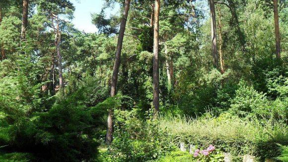 Ein bedeutsamer Ort: Auf dem Waldfriedhof Dahlem gibt es viele Berliner Ehrengräber.