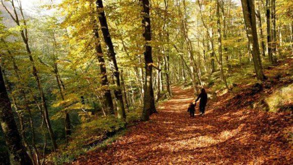 Der Wald bietet beste Voraussetzungen, um den Kopf freizubekommen und die Ruhe zu genießen.