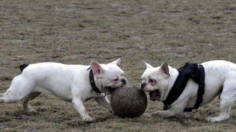 """Neue Spielregeln für Hunde sollen in Berlin mit Hilfe des """"Bello-Dialogs"""" gefunden werden - unter der Beteiligung der Bürger."""