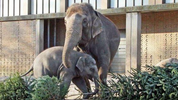 ... dem kleinen Elefanten sogar so gut, dass er sich am liebsten reinlegen möchte...