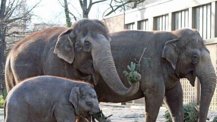 Allen Elefanten schmeckt das Knabberzeug...