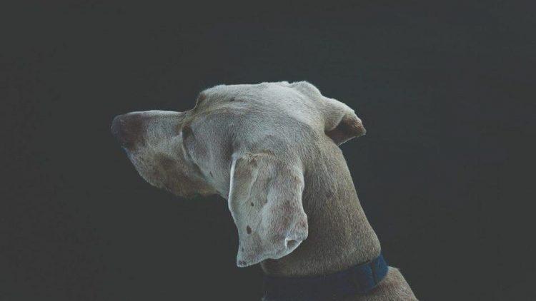 Bloß nicht den Überblick verlieren: Hier stehen die ersten Infos zur neuen Hundemesse House of Dogs.