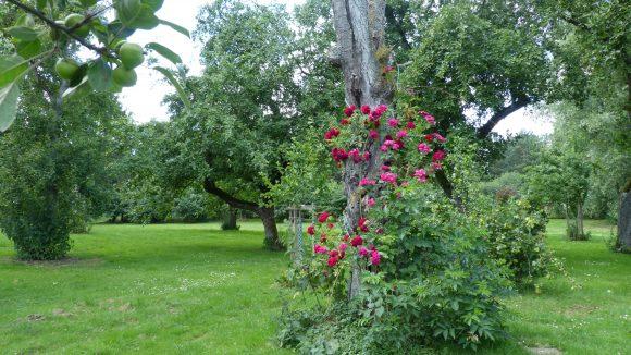Auch romantisch: der Garten mit seinen uralten Obstbäumen.