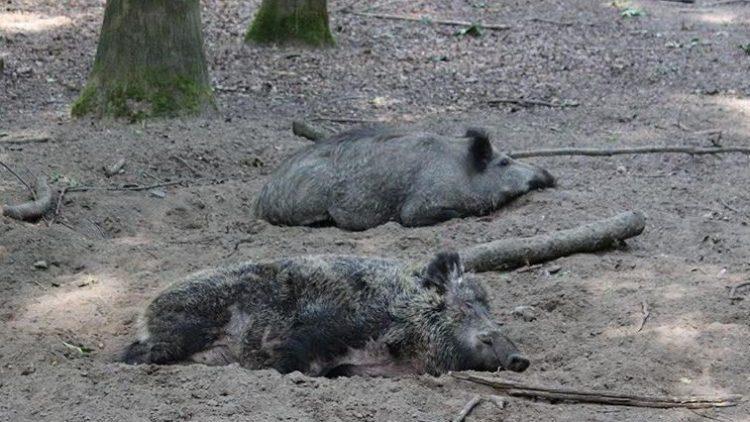 Wildtiere werden oft durch Lebensmittelreste in Wohngebiete gelockt. Die Begegnung mit den Menschen ist immer risikobehaftet.