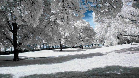 Im Winter verwandelt sich Berlin in eine traumhafte Winterlandschaft - sofern es denn Schnee gibt.