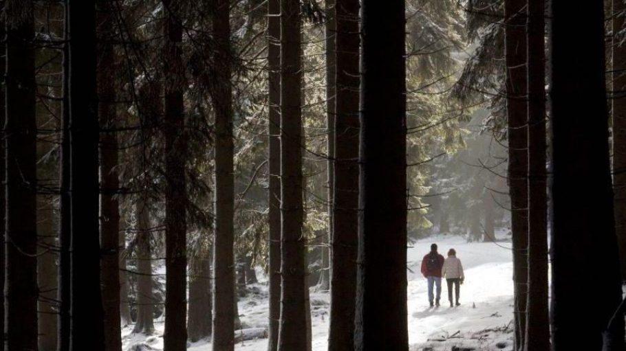 Ob die Berliner Wälder in diesem Jahr auch so verschneit sein werden? Egal bei welchem Wetter: den Bäumen in den Forsten geht es immer besser.