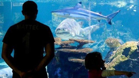 """""""Schreien Sie Barracuda, dann werden sie sagen: Häh? Was? Schreien Sie Haie, dann haben wir am 4. Juli eine handfeste Panik."""" Mit beiden Problemen aus dem """"Weissen Hai"""" wird am 18. August aufgeräumt: Haie sind meist ungefährlich. Und auch was ein Barracuda ist, dürfte sich klären."""