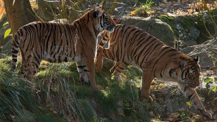 Die Raubtierkäfige im Tierpark erregen beim neuen Zoochef nur Mitleid.