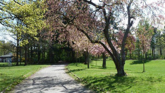 Die Gehwege im Gemeindepark Lankwitz sollen heruntergekommen sein. Bei gutem Wetter kann man nichts davon erkennen.