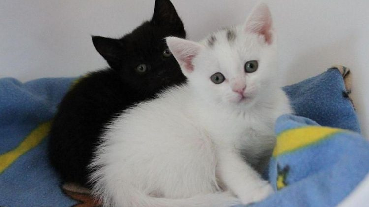 Im Tierheim geboren: Diese beiden Kätzchen suchen ab Juli ein liebevolles Zuhause.
