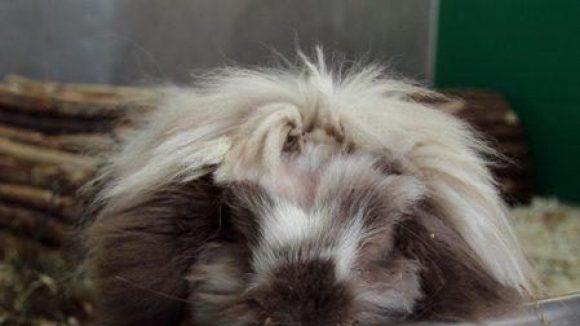 Lulus Haare liegen immer schön ...