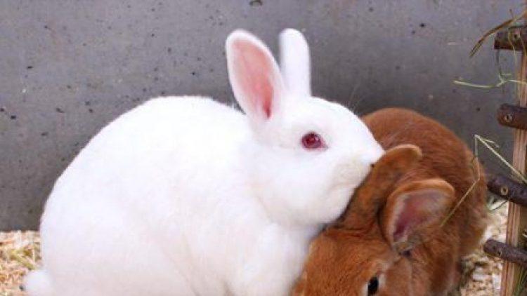 Die beiden Kumpel Ricky (weiß) und Pucky ...