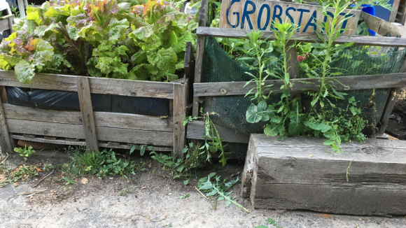 """Eine grüne Oase mitten in der Stadt: Auch das Kita-Beet der """"Großstadtgören"""" müsste dem Bagger weichen."""