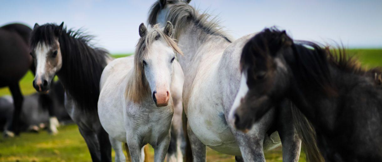 Weiden und Koppeln sind für Pferde ebenso wichtig wie Futter und Pflege – und darauf achten unsere Top 10-Reiterhöfe.