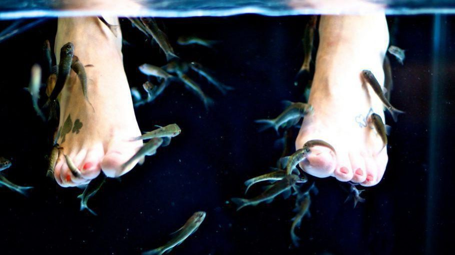 Fische an den eigenen Füßen nagen lassen? Eine komische Pediküre – mit Effekt!
