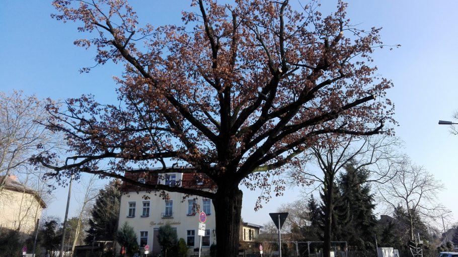 Mitten im Ort steht ein großer Baum, den wir uns einfach mal grün denken. ©Ronja Hegemann