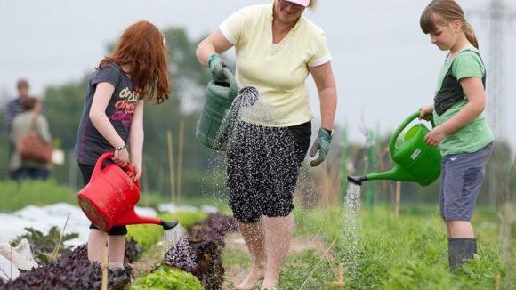 Es muss nicht der nächste Supermarkt sein: Salat und Co. kannst du auch auf deinem eigenen Acker anbauen.
