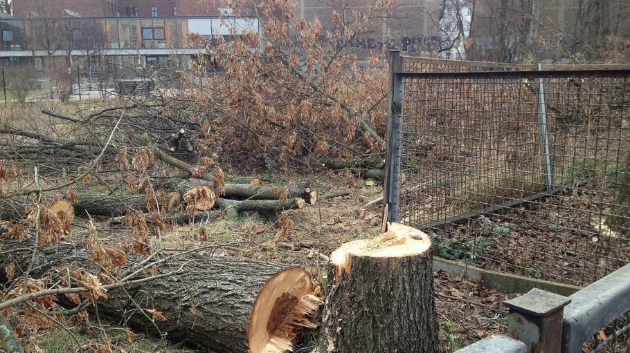 Seit gestern Mittwochabend sieht es an der Ecke ganz anders aus, die Bäume an der Ecke Ackerstraße / Elisabethkirchstraße wurden gefällt.