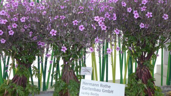 Auf der IGA konte sich Rothe Gartenbau die Große Goldmedaille sichern.