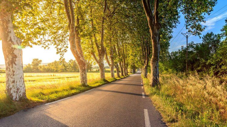 Straße im Sonnenschein von Bäumen gesäumt.
