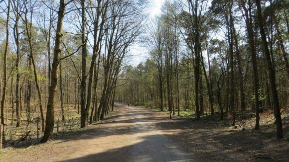 Blick auf den leeren Hauptweg Richtung Chalet. (c) Trieba