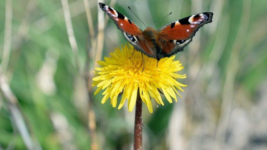 Der Frühling lockt ... ab Ende April auch wieder im Garten der Sinne.