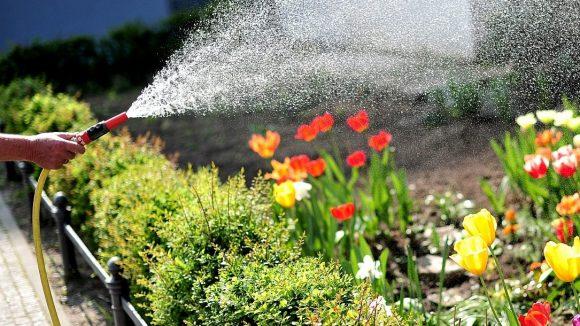 Blumen und Bäume haben in diesen Tagen Wasser dringend nötig.
