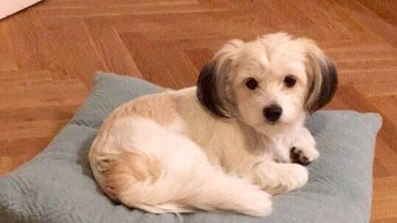 Cristinas süßer Hund Mylo.