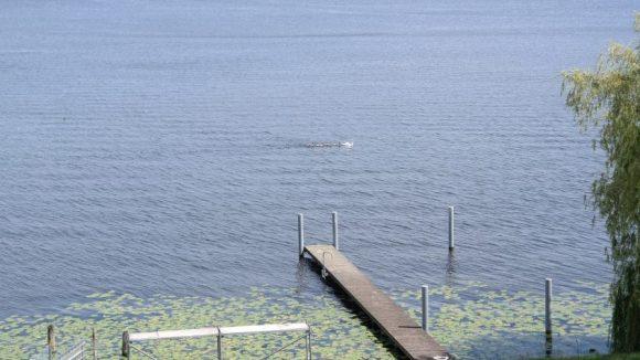Dieses 'Bootsdock' am Dämeritzsee soll nach dem Willen des Umweltamts entfernt werden, da es inmitten von Seerosen steht.